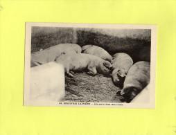 """Collection """"Pour L´Enseignement Vivant"""" Série : L´Industrie Laitière - Les Porcs Dans Leurs Cases  N°24 - Cartes"""
