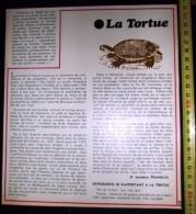DOCUMENT  CONCERNANT LA TORTUE - Vieux Papiers