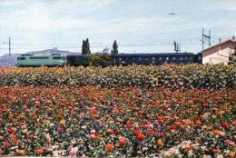 B11974 Fleurs Dans La Vallée Du Rhône - Sin Clasificación