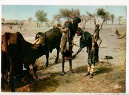 NIGER . RÉPUBLIQUE DU NIGER . SCÈNE DE VIE BOROROS À TILLIA - Réf. N°8906 - - Niger