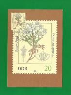 DDR 1982  Mi.Nr. 2693 , Sumpf-Porst - Giftpflanzen - Maximumkarte - 06.04.1982 - Toxic Plants