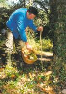 40 Landes POUILLON  (7)  La Cueillette Des Cèpes (champignons Champignon )  * PRIX FIXE - France