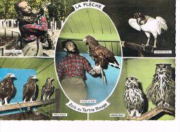 CPSM (72) LA FLECHE - Zoo  Du Tertre  Rouge  - (054) - La Fleche