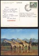 BASUTOLAND - GB - TYPE DEAR DOCTOR - CHER DOCTEUR - PLASMARINE / 1950´s  CARTE POSTALE POUR LA FRANCE (ref DD19E) - Lesotho