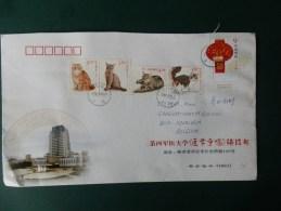 GROOT FORMAATT   LETTRE  CHINE - Domestic Cats