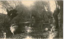 Creteil Le Morbras Et Les Saules 1912 - Creteil