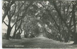 Norman Postcard,  Ilex Grove, Ferring By Sea, Photographic, D16396 - Altri
