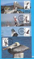+ BRITISH VIRGIN ISLANDS 1988; Maximum Card, Complete Set Of 4; Mi: 637 - 640; WWF, Brown Pelican, Braune Pelikan, Birds - British Virgin Islands