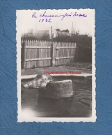 Photo Ancienne - Phoque De La Chaume Prés Des Sables D´Olonne - 1932 - Zoo - Animal - Lieux