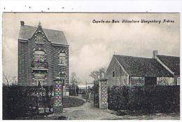 Capelle-au-bois - Diticulture Waeyenberg Freres - Kapelle-op-den-Bos
