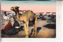 DSCHIBUTI / DJIBOUTI - Le Marche - Dschibuti
