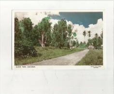 89380 CLOVE TREES ZANZIBAR - Tanzania