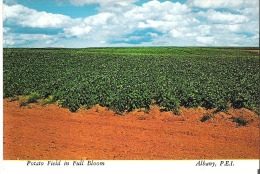 Potato Field In Full Bloom, Albany, Prince Edward Island  Glue On Back  Colle En Dos - Other