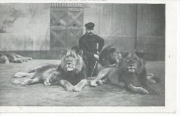 SOUVENIR DE BOSTOCK ( CIRQUE / FORAIN ) DOMPTEUR - Circo