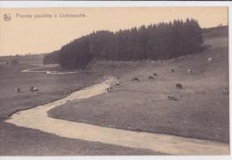 OUTREWARCHE : Prairies Paisibles - Waimes - Weismes