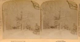 Crystal Vista, Arboles En Invierno, Strohmeyer& Wyman - Fotos Estereoscópicas