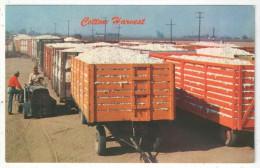 Cotton Ready For The Gin - Etats-Unis