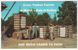 Greetings From Dixie - Bales Of Cotton Just Finished By A Cotton Gin Are Ready For The Market - Etats-Unis