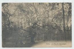 Verzy (51) : .Un Chêne De La Forêt En 1905 (animé)  PF - Verzy