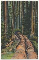 Oregon Timber - Non Classés