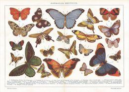 A6242 Farfalle Esotiche - Stampa Antica Del 1926 - Cromolitografia - Prints & Engravings