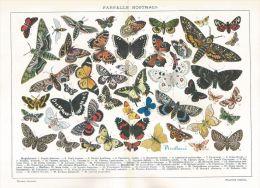 A6241 Farfalle Nostrali - Stampa Antica Del 1926 - Cromolitografia - Prints & Engravings