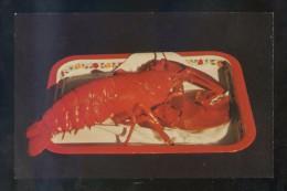 *Lobster. Red* Ed. Book Room Nº 591. Impresa En USA. Nueva. - Poissons Et Crustacés