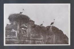 *Nids De Cigognes* Ed. La Cigogne Nº 2004. Impresa En Casablanca. Circulada 1952. - Pájaros