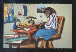 Ed. A. Kiener Nº 716. Impresa En Suiza. Nueva. - Monos