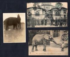 Elephants Paris 2 Postcards Elefantes Used And 1 Photo Total 3 Items Original Ca1900 Postcard Cpa Ak (W4_1033) - Elefantes
