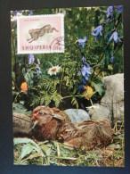 Carte Maximum Card Albanie 1964 Lapin Rabbit Ref 53713 - Hasen
