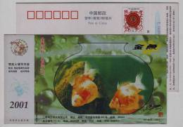 Golden Fish,China 2001 Jinyu Shirt Advertising Pre-stamped Card - Fishes