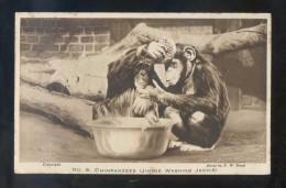 *Chimpanzees. Jimmie Washing Jackie* Edición Inglesa. Nueva. - Monos
