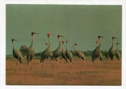 VIETNAM - AK 229400 Mekong Delta - Flamingo - Dong Thap - Viêt-Nam