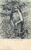 Ref- F729 - Ceylon - Ceylan - Tamil Tea Plucker - Cueilleuse De The - - Postcards