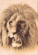 Tête De Lion - Lions