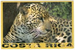COSTA RICA - TIGRE/JAGUAR /THEMATIC STAMP-SEA LIFE - Costa Rica