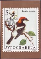 YUGOSLAVIA - JUGOSLAVIA - MAXI CARD - BIRDS - SONGBIRDS - 1991 - Sperlingsvögel & Singvögel