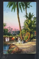 Old Africa Postcard - Chemin Dans La Palmeraie - Argelia