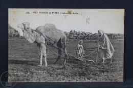 Old Africa Postcard - Scenes Et Types - Labourage Arabe - Postales