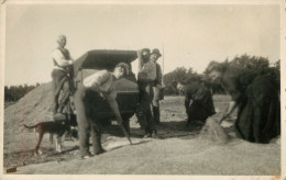 BELLE CARTE PHOTO - MOISSON - BATTEUSE -  CHAMPS - - Tracteurs