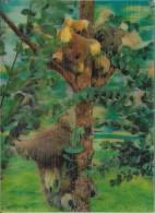 Carte Stéréoscopique 3D. Koalas Sur Un Arbre. - Cartes Stéréoscopiques