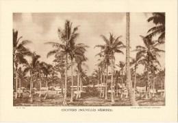 """Photo : Nlles Hébrides(Vanuatu) Cocotiers- Fmat  20 X 29 - """"Librairie De L´enseignement """" - 1936 - (t554) - Luoghi"""
