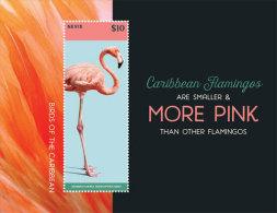 Nevis-2015-Birds - Unclassified