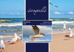 St. Kitts-2015-Birds-Seagulls - Unclassified