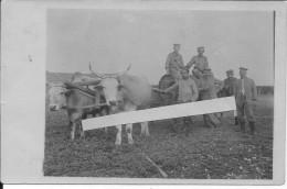 Soldats Allemands En Argonne Avec Attelage De Boeufs Tirant Une Citerne 1 Carte Photo 1914-1918 Ww1 Wk1 - War, Military