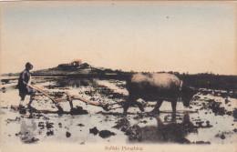 Buffalo Ploughing , 00-10s - Postcards