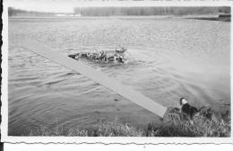 Aisne Villers-cotterêts Cerf Entouré Par La Meute Dans L'étang De La Hamée 1 Photo Chasse à Courre équipage Curée - Places