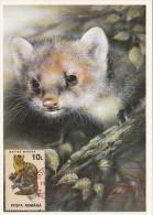 18589- EUROPEAN PINE MARTEN, MAXIMUM CARD, 1993, ROMANIA - Sellos