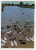 VIETNAM - AK 229745 A River In Hau Giang - Viêt-Nam